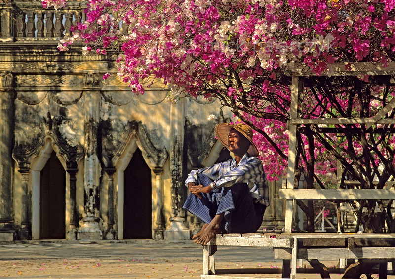[BURMA 24.899] 'Resting under a bougainvillea.'  In the courtyard of Bagan's Ananda Temple a gardener is taking a rest under a bougainvillea. Photo Mick Palarczyk.