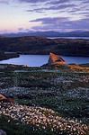 [BRITAIN.HEBRIDES 27703] ?Broch of Dun Carloway.?  Surrounded by the white plumes of common cottongrass the broch of Dun Carloway on the northern shore of the Isle of Lewis catches t ...